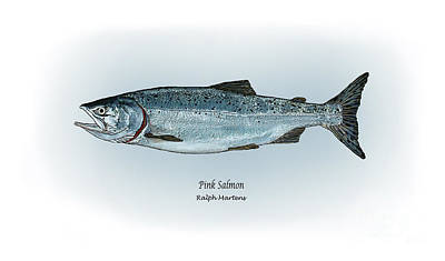 Salmon Drawing - Pink Salmon by Ralph Martens