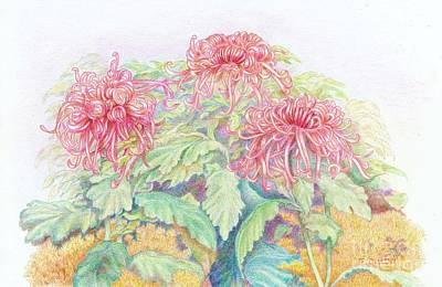 Aster Drawing - Pink Spider Mums by Frances  Dillon
