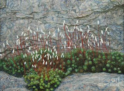 Pink Stony Creek Granite Still Life Study Print by Cindy Lee Longhini