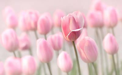 Pink Tulip Cloud Print by Mary Jo Allen