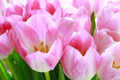 Sweet Digital Art - Pink Tulips by Margaret Hood