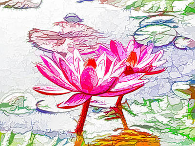 Pink Water Lily Flowers Blooming On Pond Print by Lanjee Chee