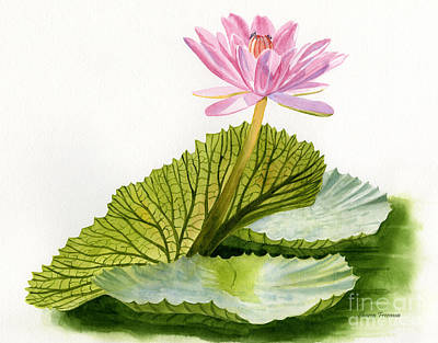 Pink Water Lily With Textured Pads Print by Sharon Freeman