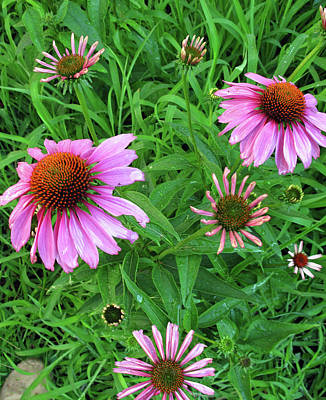 Photograph - Pinks In Bloom by Barbara McDevitt