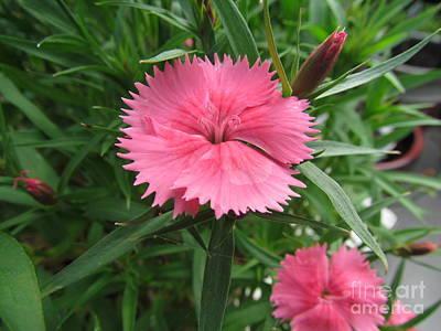 Pinks Print by Joyce Woodhouse
