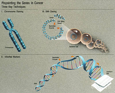 Pinpointing The Genes In Cancer Print by Science Source