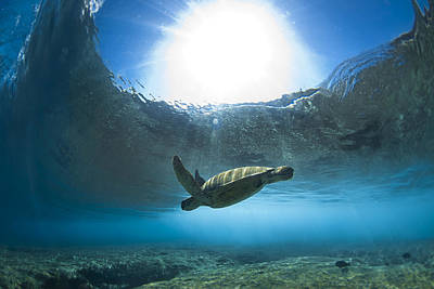 Pipe Turtle Glide  -  Part 1 Of 3 Print by Sean Davey