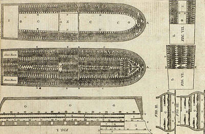 Cruelty Drawing - Plan Of Brooks Slave Ship by American School