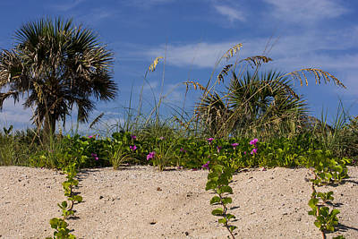 Tropical Photograph - Plants On The Florida Beach by Zina Stromberg