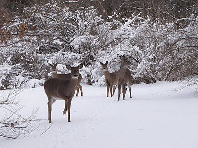 Hovind Photograph - Playing In The Snow by Scott Hovind