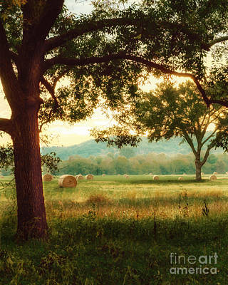 Photograph - Pleasant Morning by Tamyra Ayles