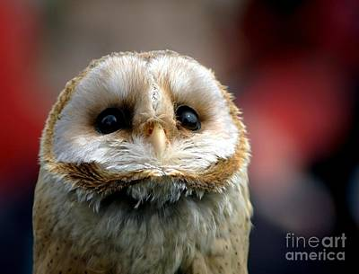Owl Photograph - Please  by Jacky Gerritsen
