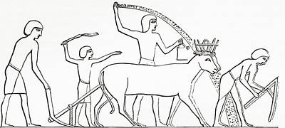 Ancient Civilization Drawing - Ploughing, Hoeing And Sowing by Vintage Design Pics