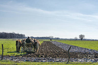 Amish Photograph - Plowing After Snow by David Arment
