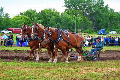 Amish Photograph - Plowing Demo by David Arment
