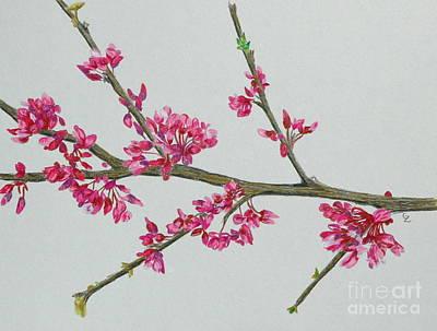 Plum Blossom Print by Glenda Zuckerman