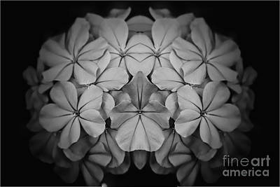 Balck Art Photograph - Plumbago Reflection by Clare Bevan