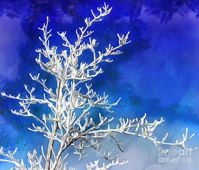 Winter Trees Photograph - Pogonip Blues by Krissy Katsimbras