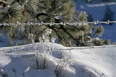 Snow Drifts Photograph - Pogonip In The Air by Donna Kennedy