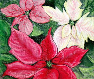 Poinsettia Pastel Original by Nancy Mueller