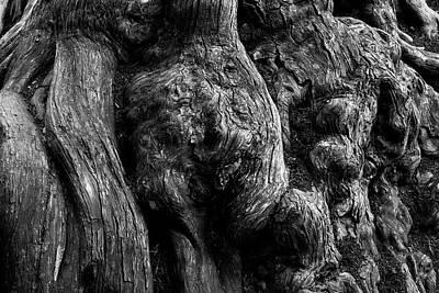 Cypress Stump Photograph - Point Lobos V Bw by David Gordon