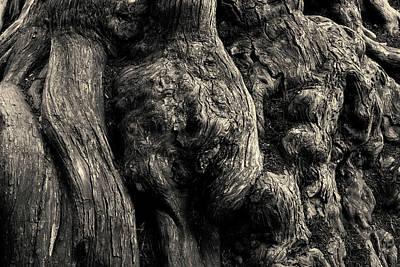 Cypress Stump Photograph - Point Lobos V Toned by David Gordon
