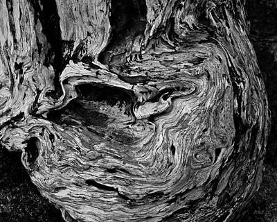 Cypress Stump Photograph - Point Lobos Vi Bw by David Gordon