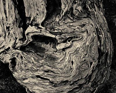 Cypress Stump Photograph - Point Lobos Vi Toned by David Gordon