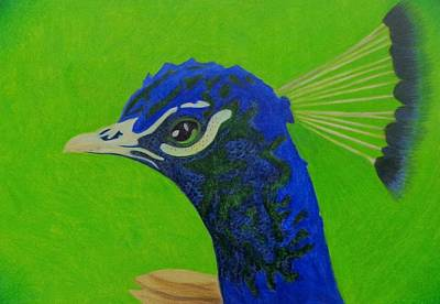 Blending Drawing - Poised Peacock  by Keely Keeney
