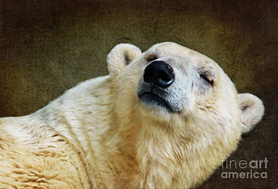 Bear Mixed Media - Polar Bear by Angela Doelling AD DESIGN Photo and PhotoArt