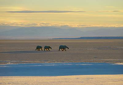 Bear Photograph - Polar Bear Sow And Cubs On Kaktovik Lagoon Alaska With Brooks Ra by Reimar Gaertner
