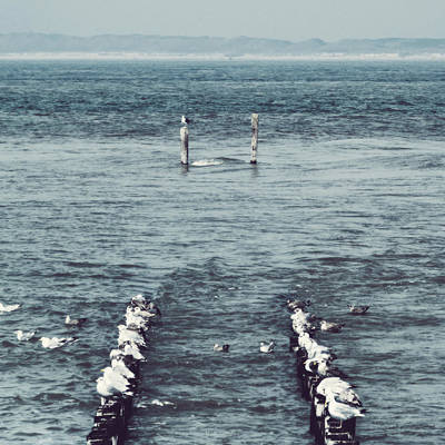 Sea Gull Photograph - Pole Position by Wim Lanclus