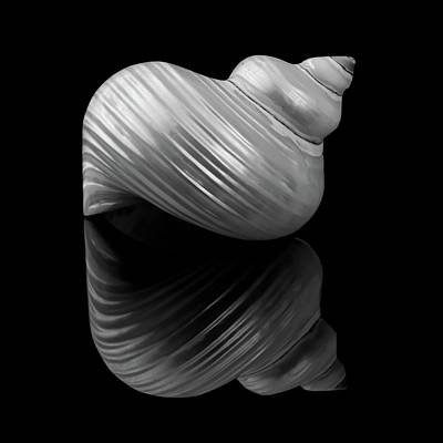 Spiral Photograph - Polished Turban Shell And Reflection by Jim Hughes