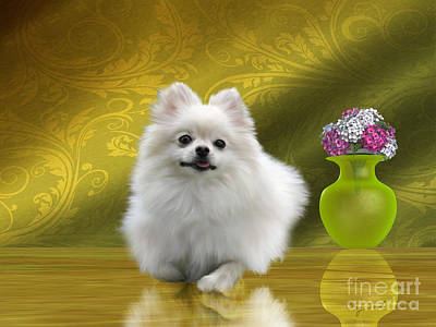 Pomeranian Dog Print by Corey Ford