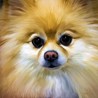Puppies Digital Art - Pomeranian by Thanh Thuy Nguyen