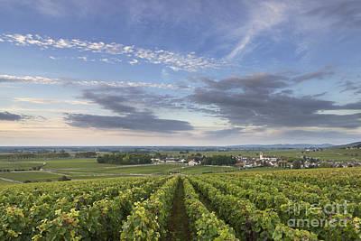 Vines Photograph - Pommard - Burgundy by Rod McLean
