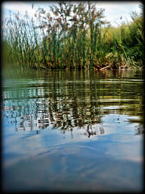 Shift Digital Art - Pond And Reeds by Tammy Wetzel
