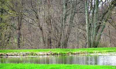 Natures Work Beautify Photograph - Pond Starts To Grow by Debra     Vatalaro