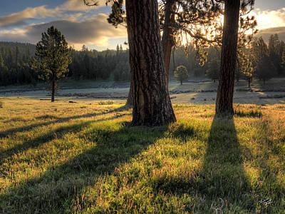 Ponderosa Pine Meadow Print by Leland D Howard