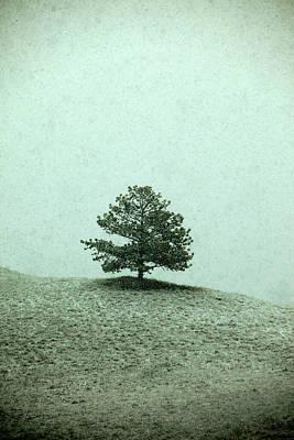Ponderosa Pine Print by Todd Klassy