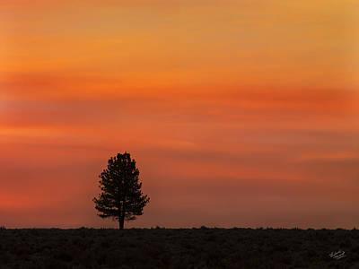 Deschutes Photograph - Ponderosa Silhouette by Leland D Howard