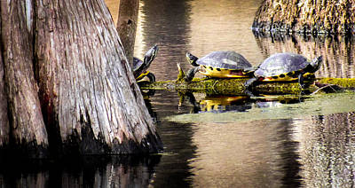Pond Turtle Photograph - Ponds Of Cypress by Karen Wiles