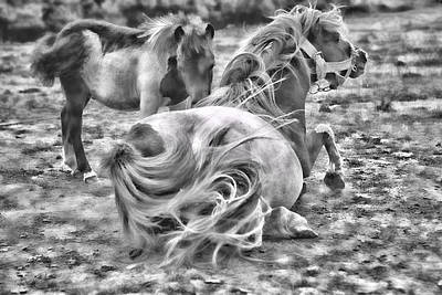 Photograph - Ponies by Contemporary  Art