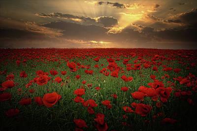 Poppies At Sunset Original by Albena Markova