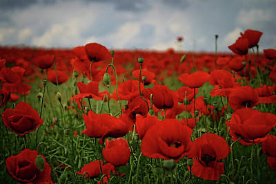 Poppies II Original by Albena Markova