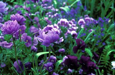 Kathy Yates Photograph - Poppies In Monet's Garden by Kathy Yates