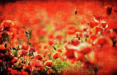 Poppies Print by Meirion Matthias