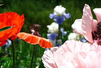 Poppy Photograph - Poppies Pink by Gretchen Wrede