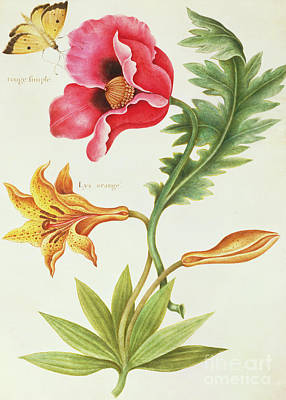 Lilies Drawing - Poppy And An Orange Lily by Nicolas Robert