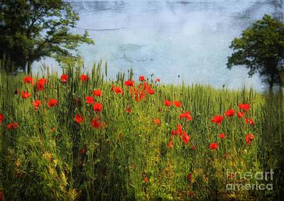 Poppy Field 1 Print by SK Pfphotography